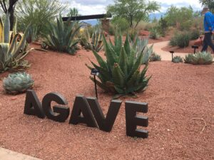 Tourism, Tourist, Photo bombing, RV, RV life, RV travel, Saint George, UT, Utah, Agave garden